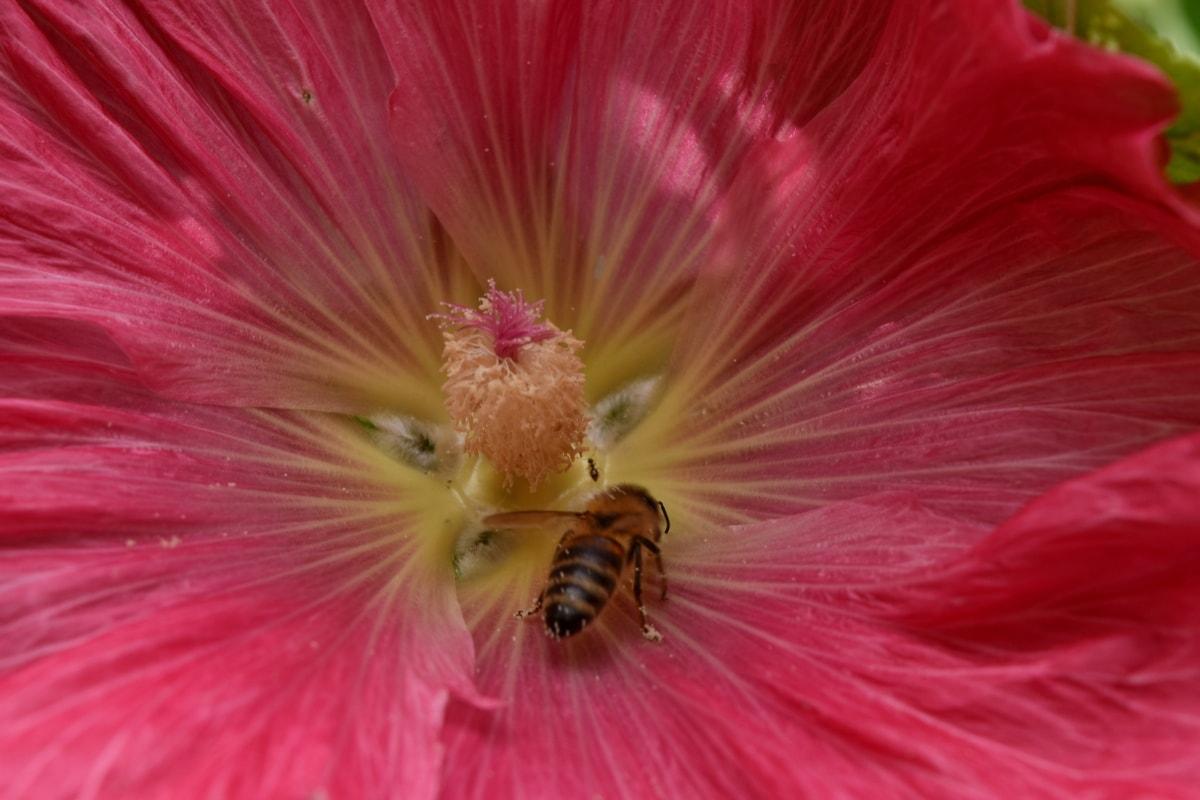 albine, albine, insectă, polenizatoare, arbust, natura, polen, plante, floare, flora