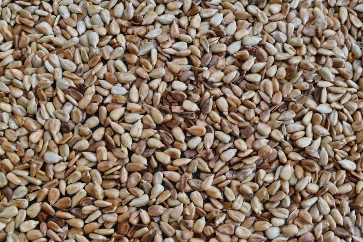 Сельское хозяйство, трава, семя, Семена подсолнечника, сухой, питание, партия, диета, Пшеница, пищевые