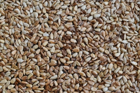 agriculture, herb, seed, sunflower seed, dry, nutrition, batch, diet, wheat, dietary