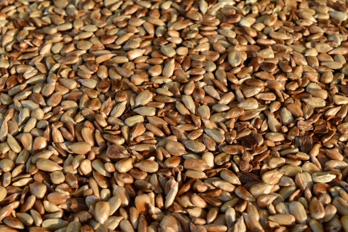 jadro, pečienka, slnečnicové semená, šarže, osivo, suché, Výživa, jedlo, Vlas, textúra