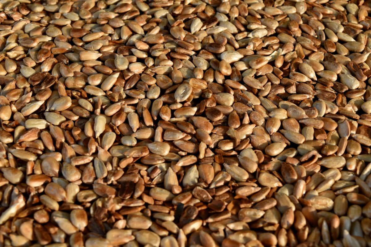 dietary, organism, roast, sunflower seed, food, batch, brown, seed, farming, dry
