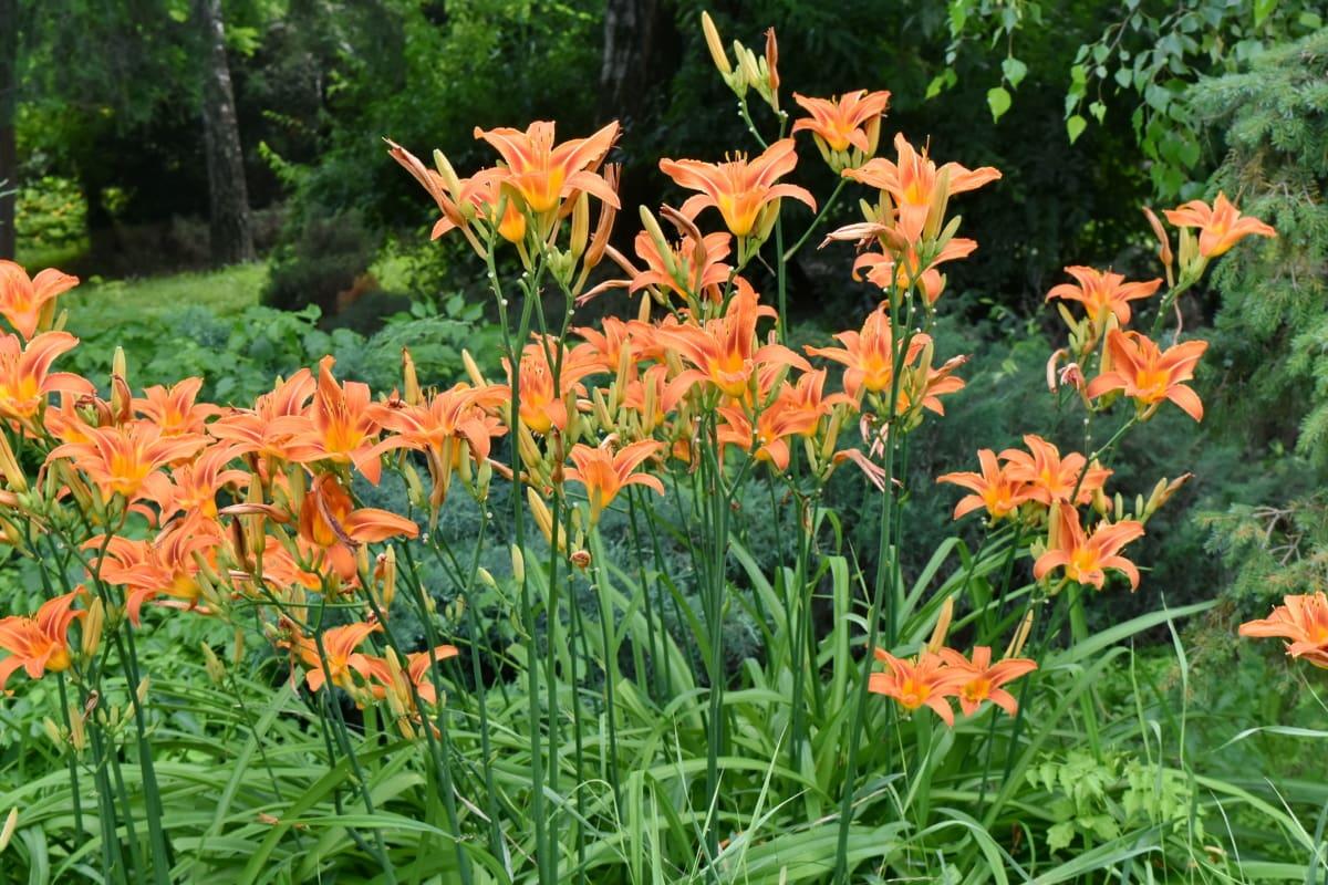 botaniska, Trädgårdsskötsel, trädgårdsodling, Anläggningen, blomma, sommar, naturen, spring, blomma, trädgård