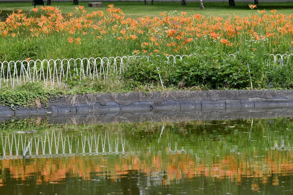 栅栏, 花卉园, 莉莉, 反射, 水, 花, 植物区系, 性质, 景观, 罂粟