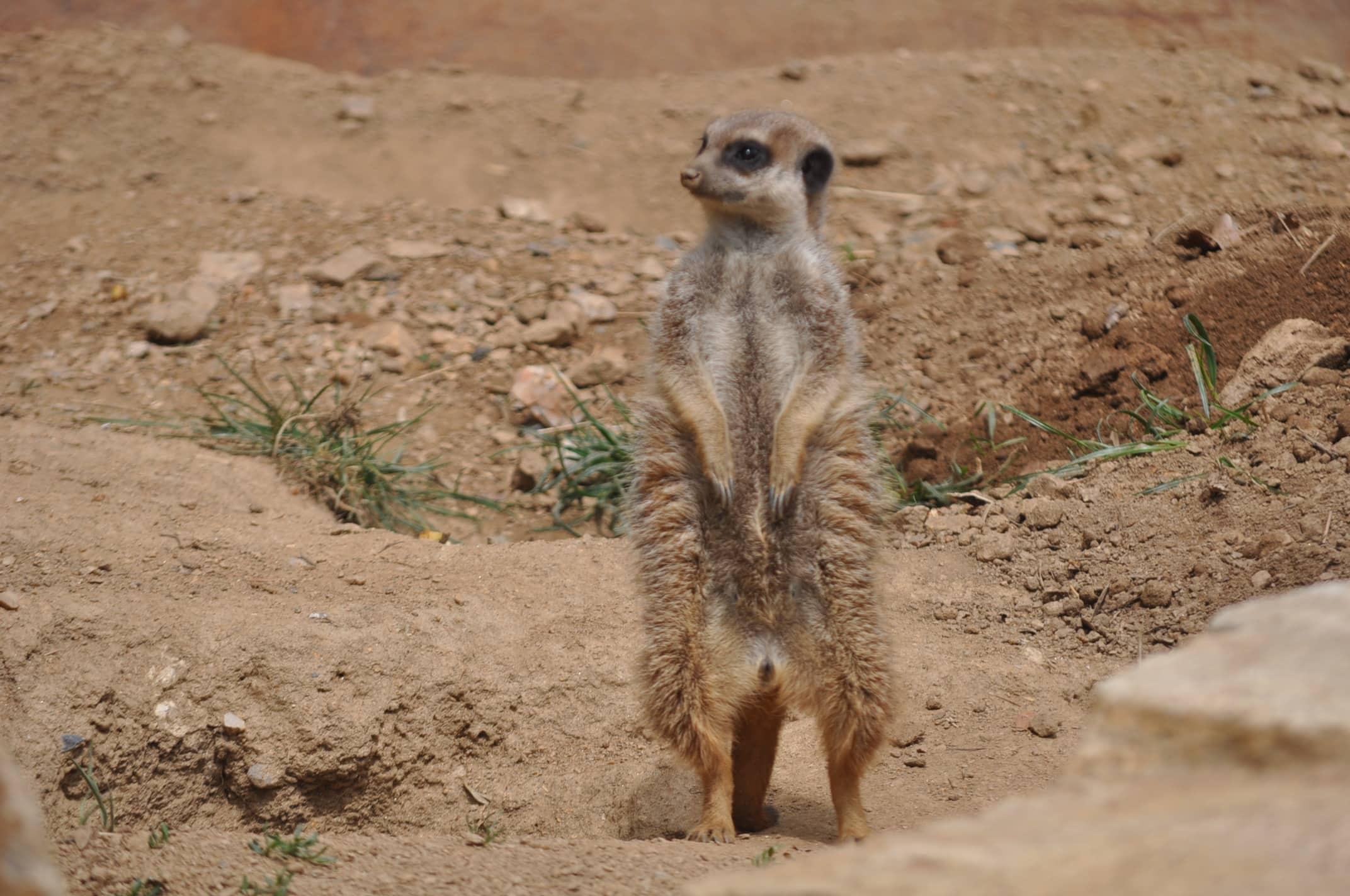 Free Picture Animal Savanna Wilderness Wildlife Wild