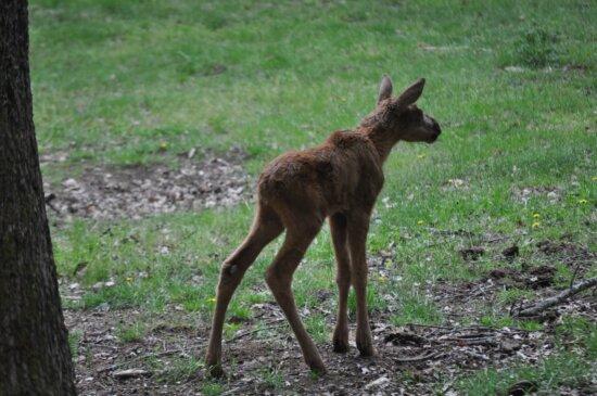 deer, wilderness, wildlife, grass, animal, nature, wild, fur, park, wood
