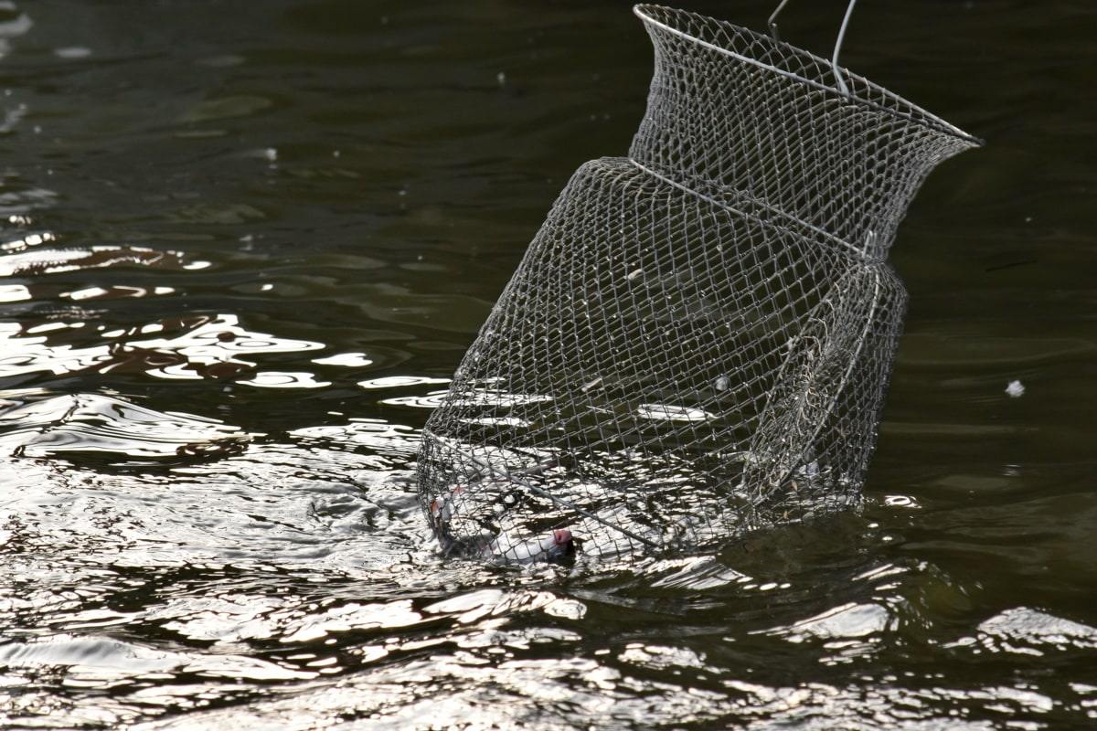 cage, catch, fishing, fishing gear, metal, water, river, lake, nature, fish