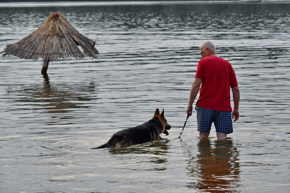 犬, 男, 夏の時間, 水, ビーチ, 犬, ・ シェパード ・ ドッグ, 湖, 川, 人々