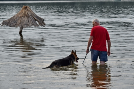dog, man, summer time, water, beach, canine, shepherd dog, lake, river, people