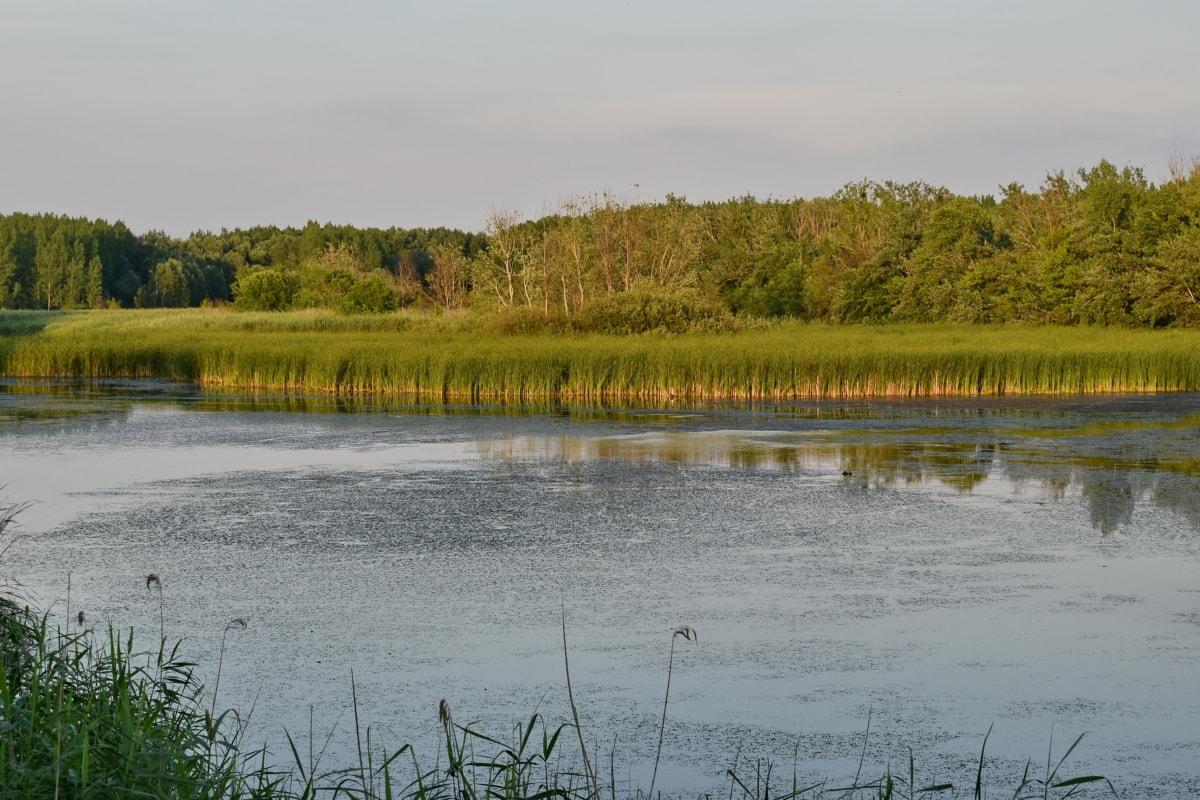湿地, 沼, 湖, 反射, ランドス ケープ, フォレスト, 水, 川, 土地, 自然