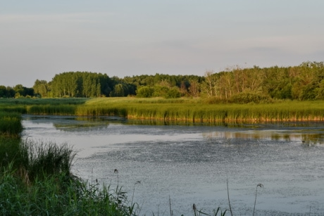 channel, swamp, land, water, river, lake, landscape, wetland, forest, nature