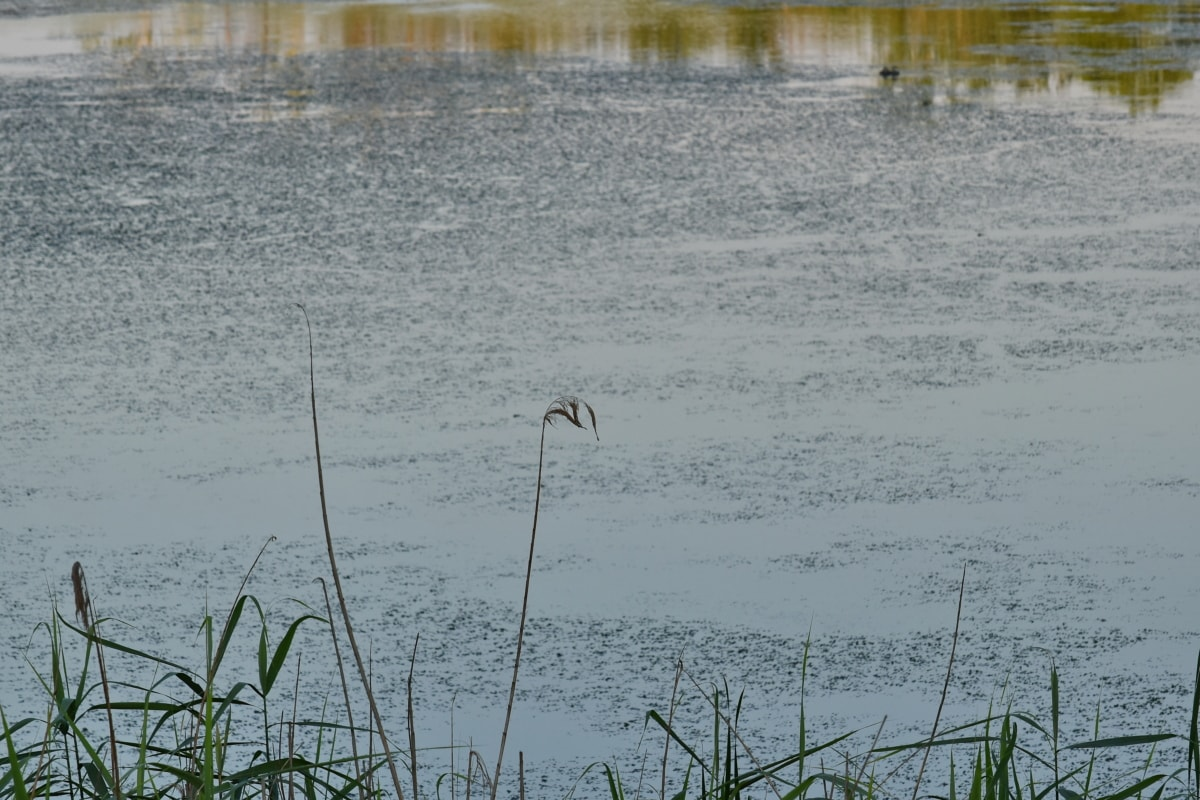 tanah rawa, bayangan, Willow, Danau, rawa, pemandangan, burung, air, rawa, alam