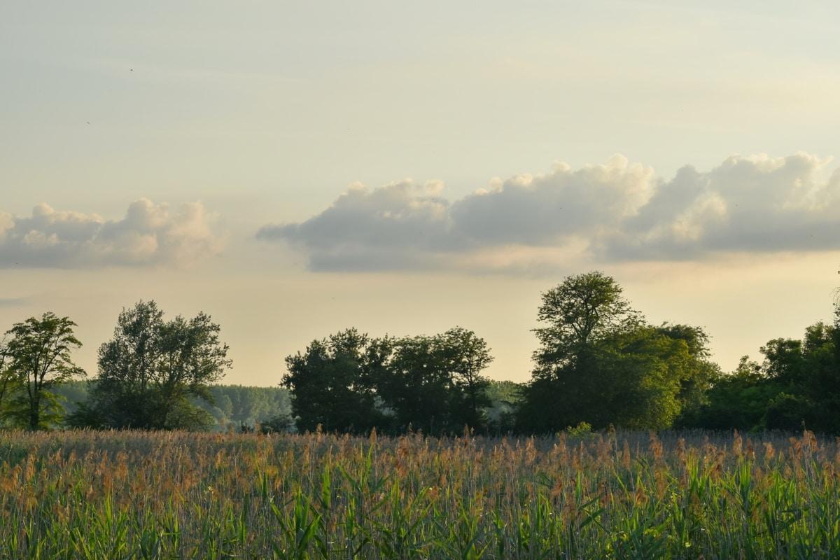tanah rawa, rawa, bidang, rumput, padang rumput, pemandangan, pedesaan, alam, matahari terbenam, musim panas