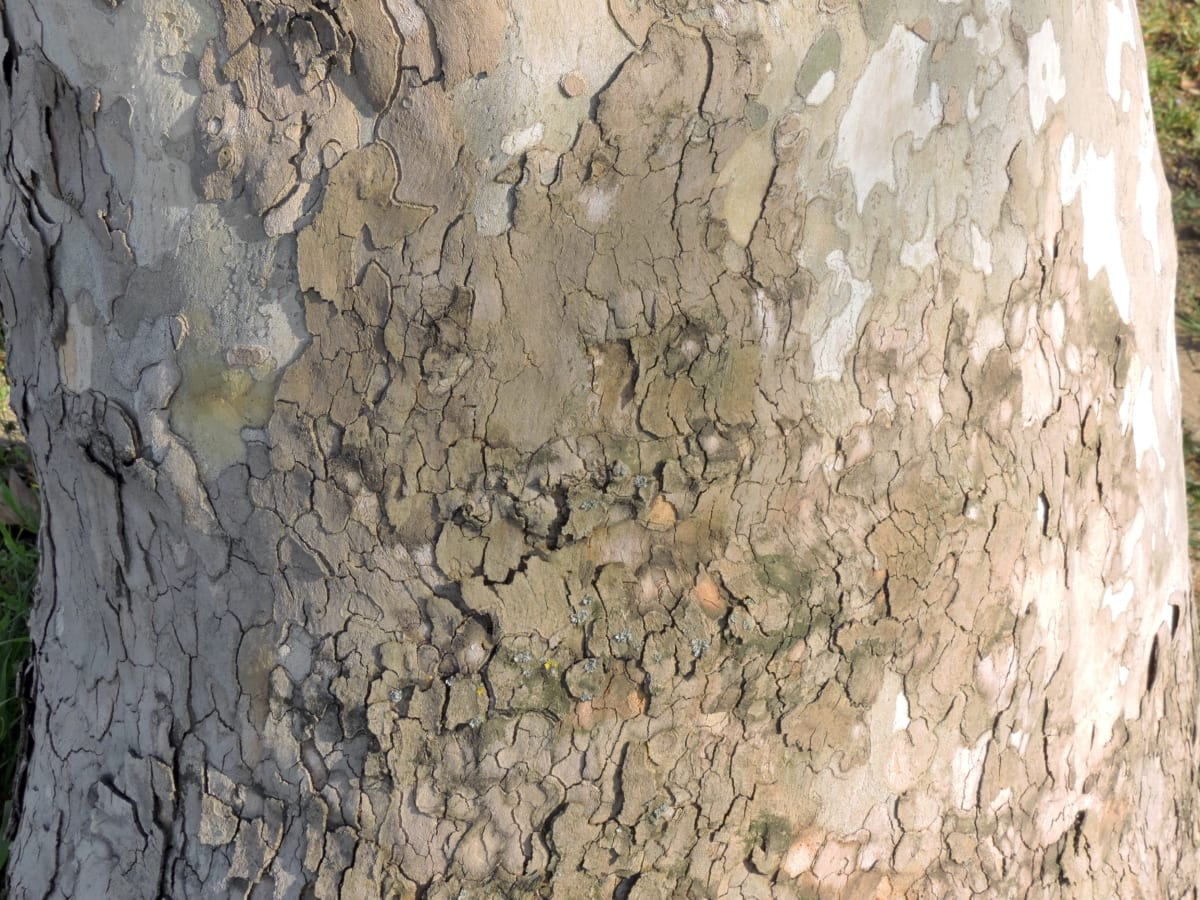 cortex, tree, surface, rough, texture, dirty, pattern, wall, old, nature
