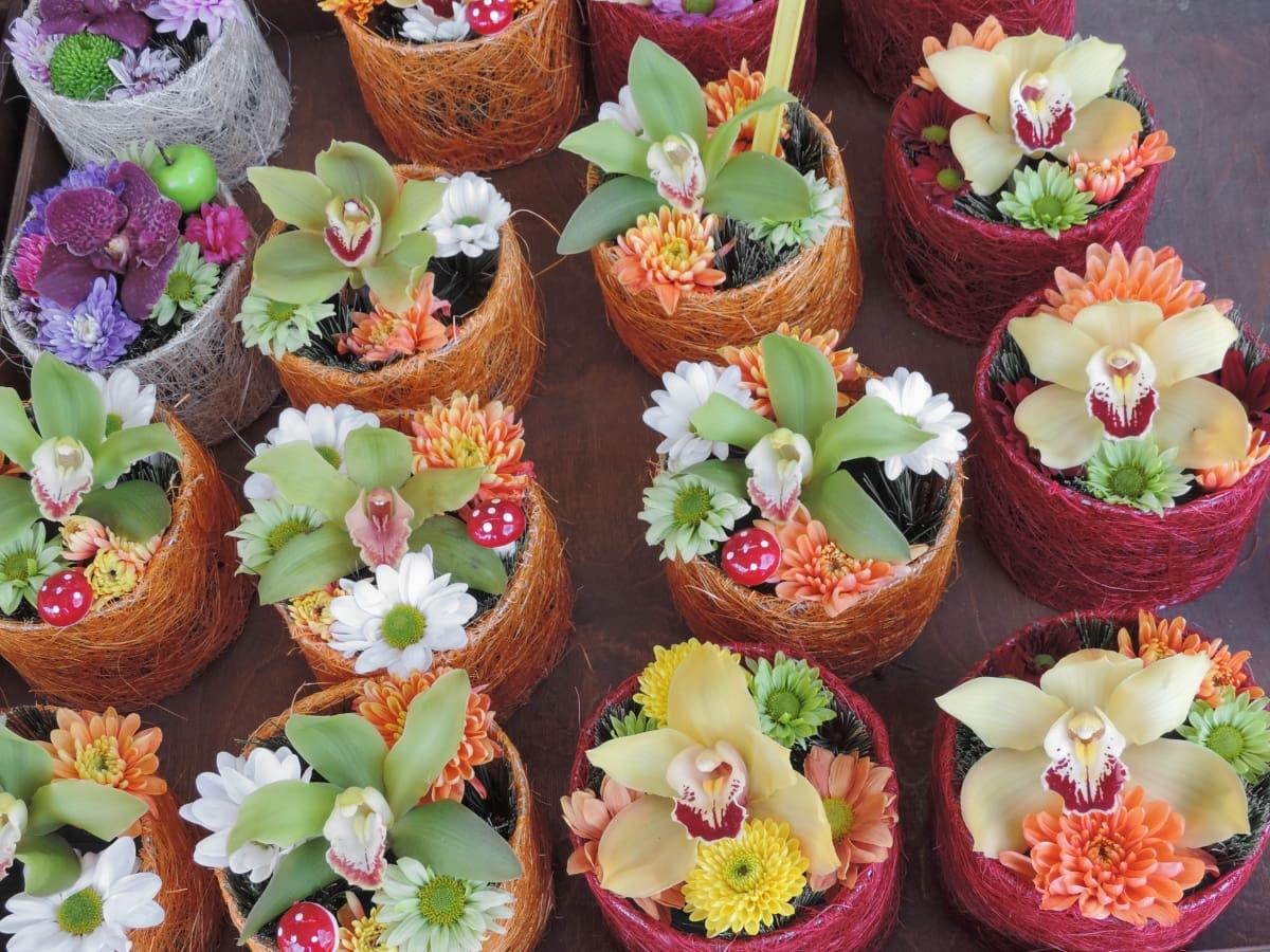 装饰, 花盆, 兰花, 静物, 性质, 叶, 许多, 花, 传统, 花