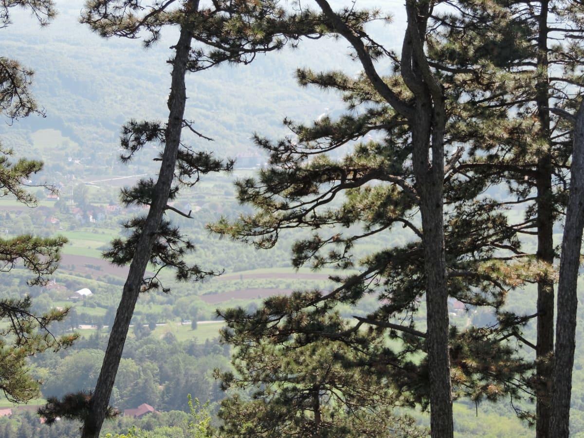 bartrær, åsene, Lia, landskapet, natur, dalen, trær, skog, treet, tre