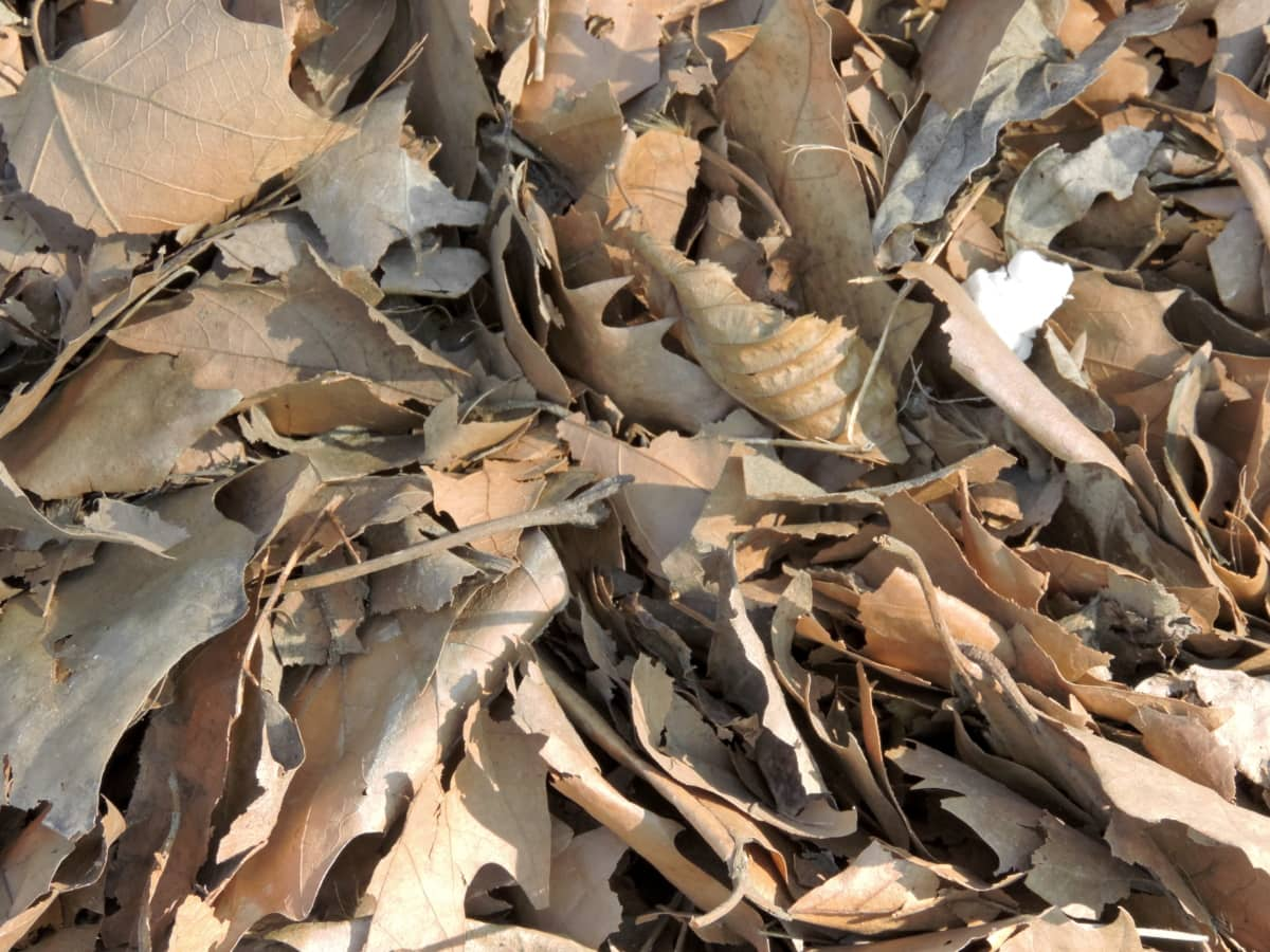dry, dry season, light brown, nature, covering, leaf, texture, trash, many, upclose