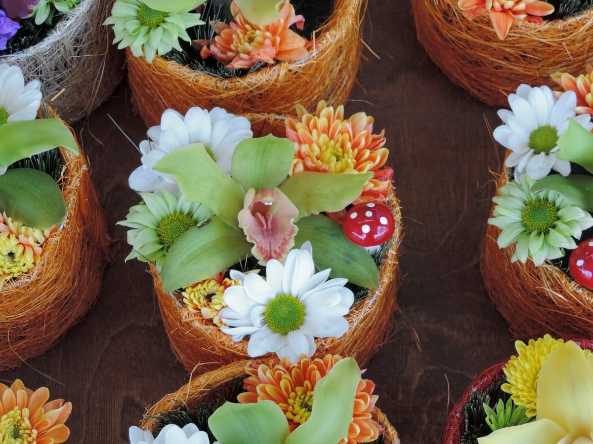 vaso di fiori, orchidea, negozio, tropico, disposizione, decorazione, bouquet, natura, foglia, fiore