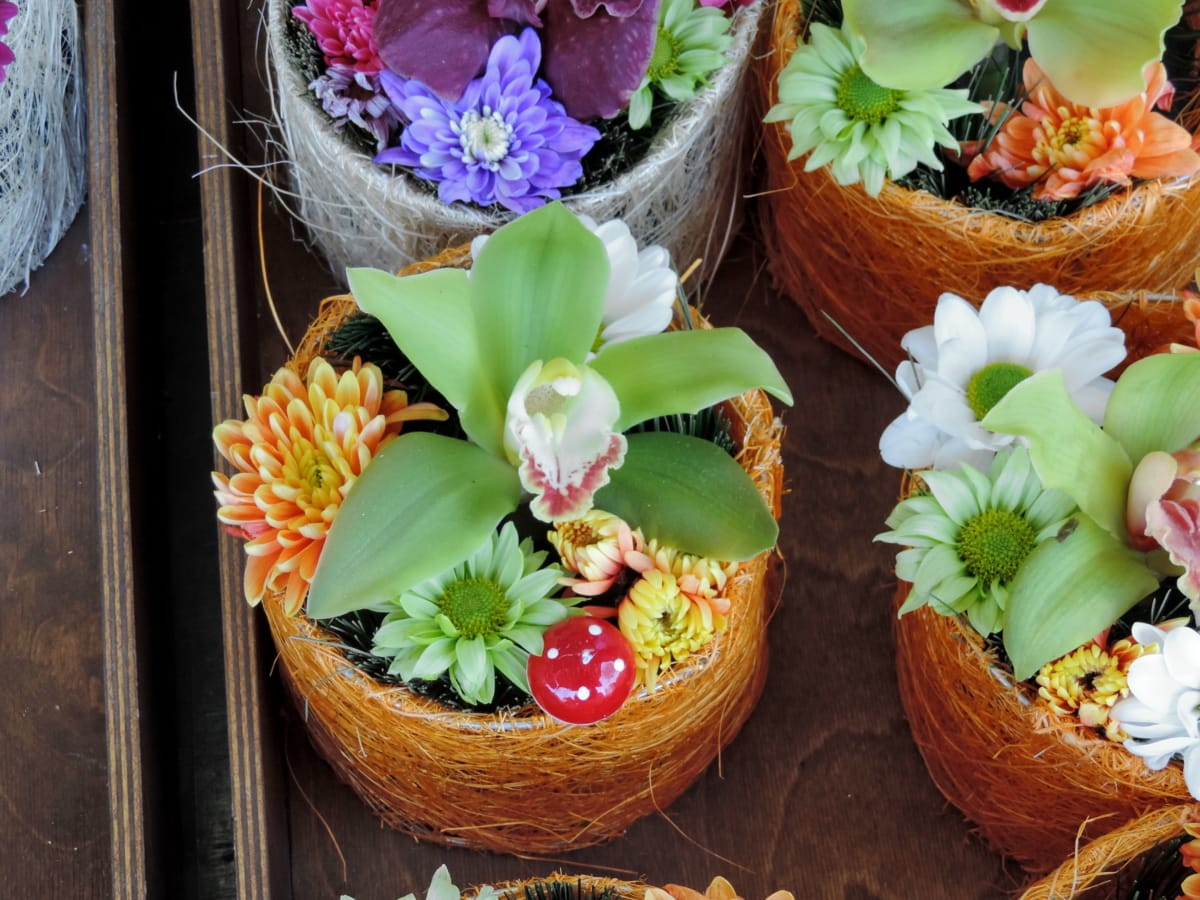декоративные, Букет, цветок, Природа, лист, украшения, Натюрморт, Цвет, Флора, красивые