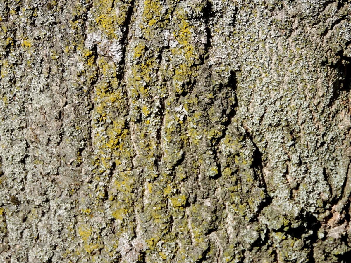 lichen, bark, rough, pattern, abstract, tree, texture, material, dirty, old