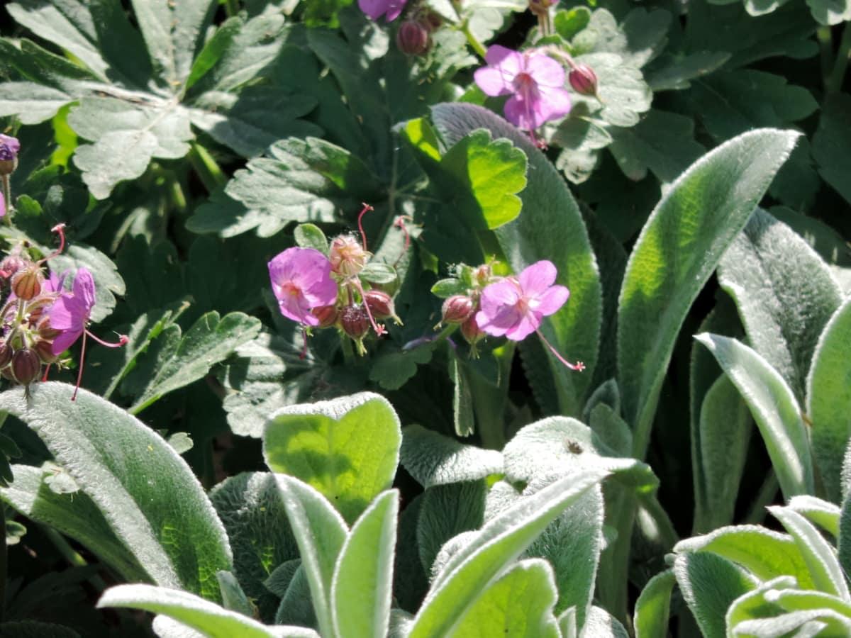 야생의 꽃, 공장, 꽃, 꽃, 잎, 자연, 여름, 정원, 플로 라, 관목