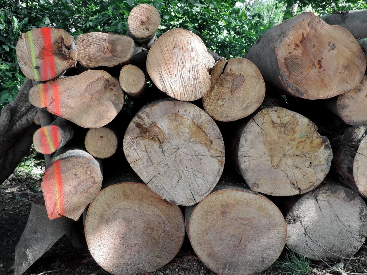 brænde, natur, træ, kuffert, brændstof, træ, skovbrug, bark, bunke, træ