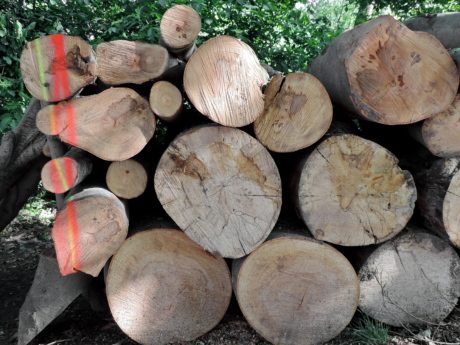 firewood, nature, tree, trunk, fuel, wood, forestry, bark, pile, wooden