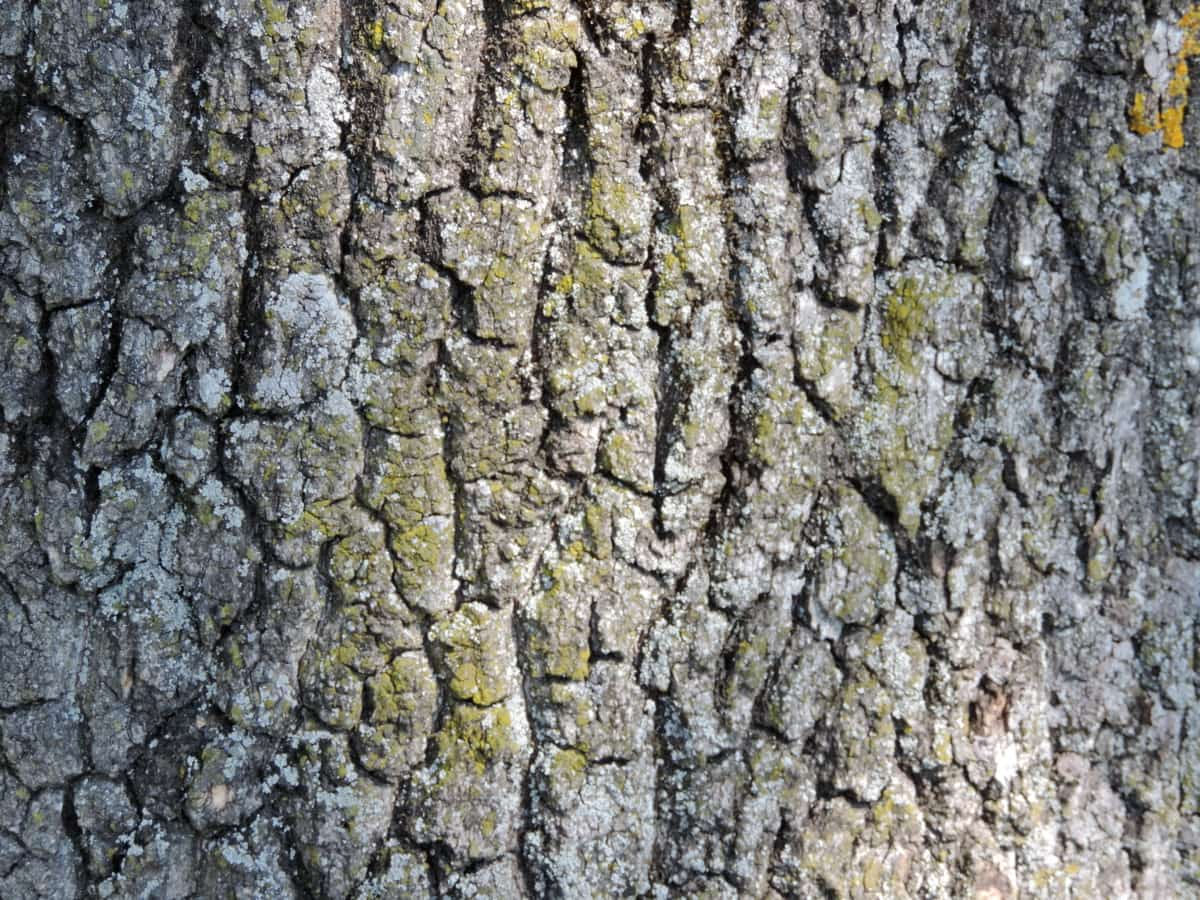 cortex, detail, lichen, texture, tree, wood, bark, rough, surface, old