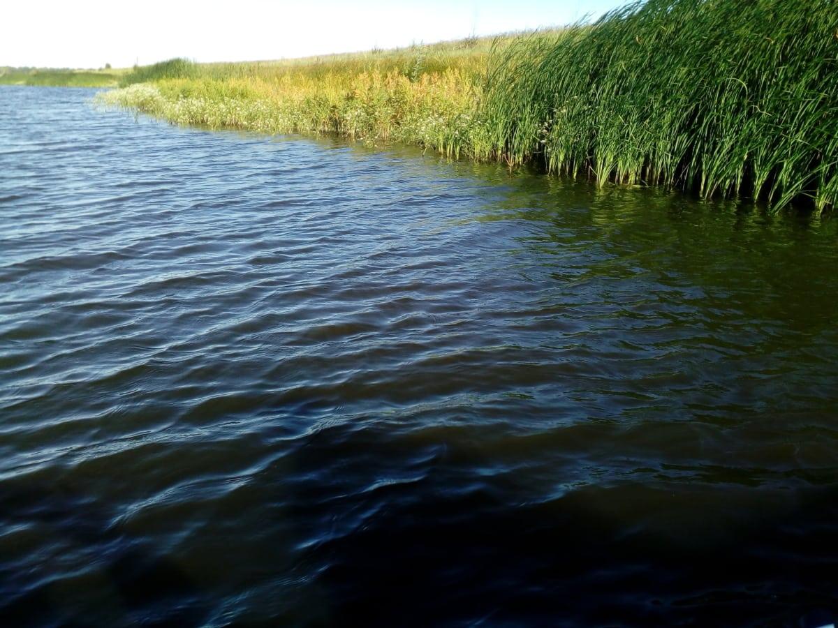 litoral, baixada, pântano, terreno baldio, ondas, Costa, Verão, ao ar livre, reflexão, paisagem