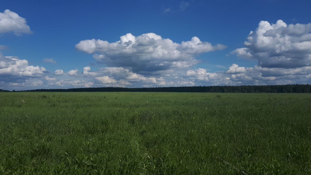 crops, field, pasture, spring, lawn, scenic, plant, earth, idyllic, summer