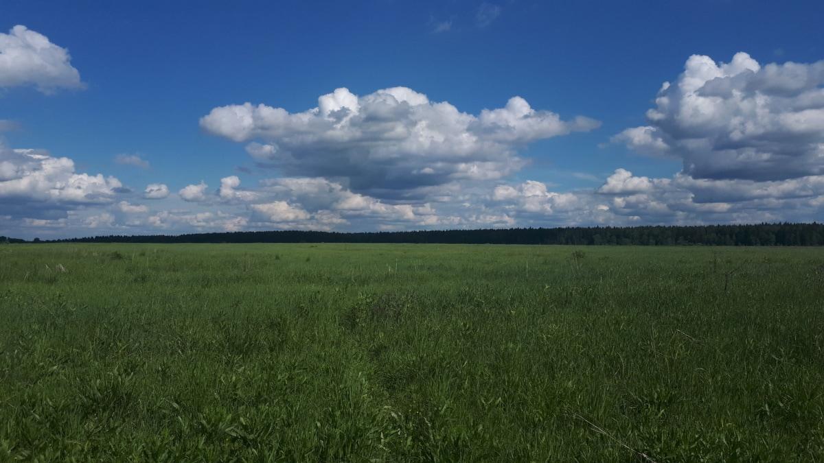 usjevi, polje, pašnjak, proljeće, travnjak, slikovit, biljka, zemlja, idilično, ljeto