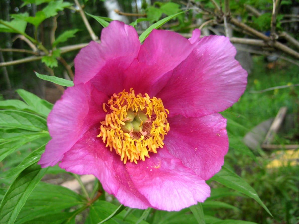 Details, Blumengarten, Gartenbau, Blütenblätter, Rosa, Frühling, Rosa, Blütenblatt, Strauch, Anlage