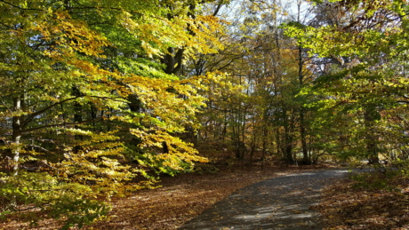 autumn season, countryside, forest road, autumn, tree, plant, leaf, trees, wood, landscape