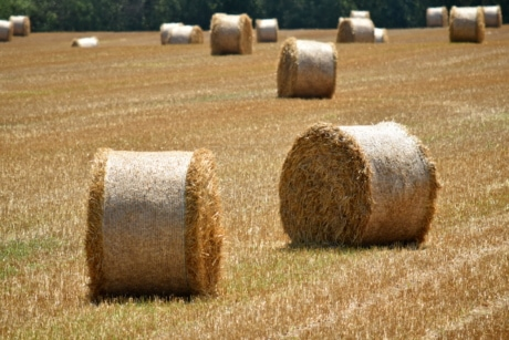 haystack, agriculture, bale, circle, cloud, countryside, crop, dry, farmland, field