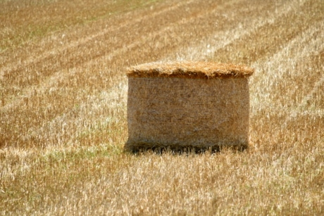 hay field, agriculture, bale, brown, countryside, farmland, field, grass, hay, land