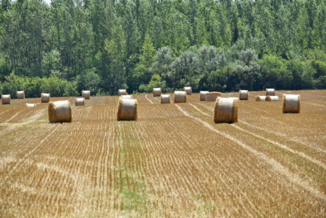 hay field, haystack, agricultural, agriculture, bale, circle, countryside, dry, farmland, feed