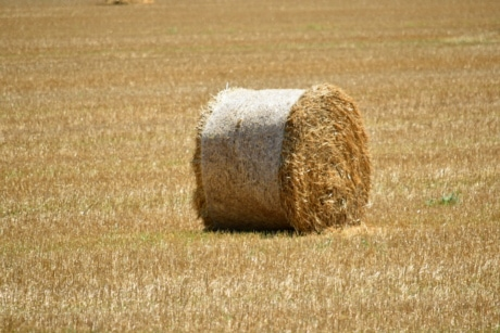 agriculture, bale, circle, countryside, dry, farmland, field, grass, harvest, hay