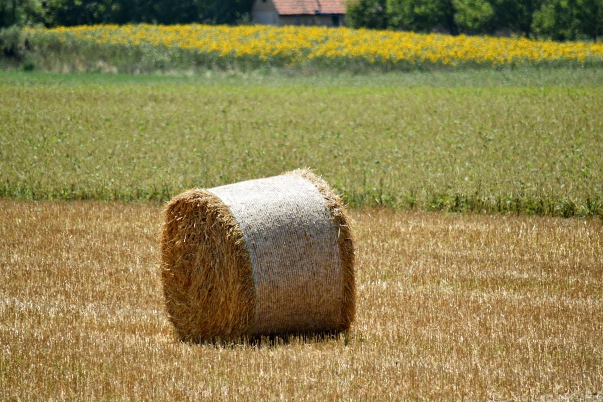 landbruk, gården, jordbruksområder, høfelt, sirkel, korn, land, landskapet, beskjære, diett
