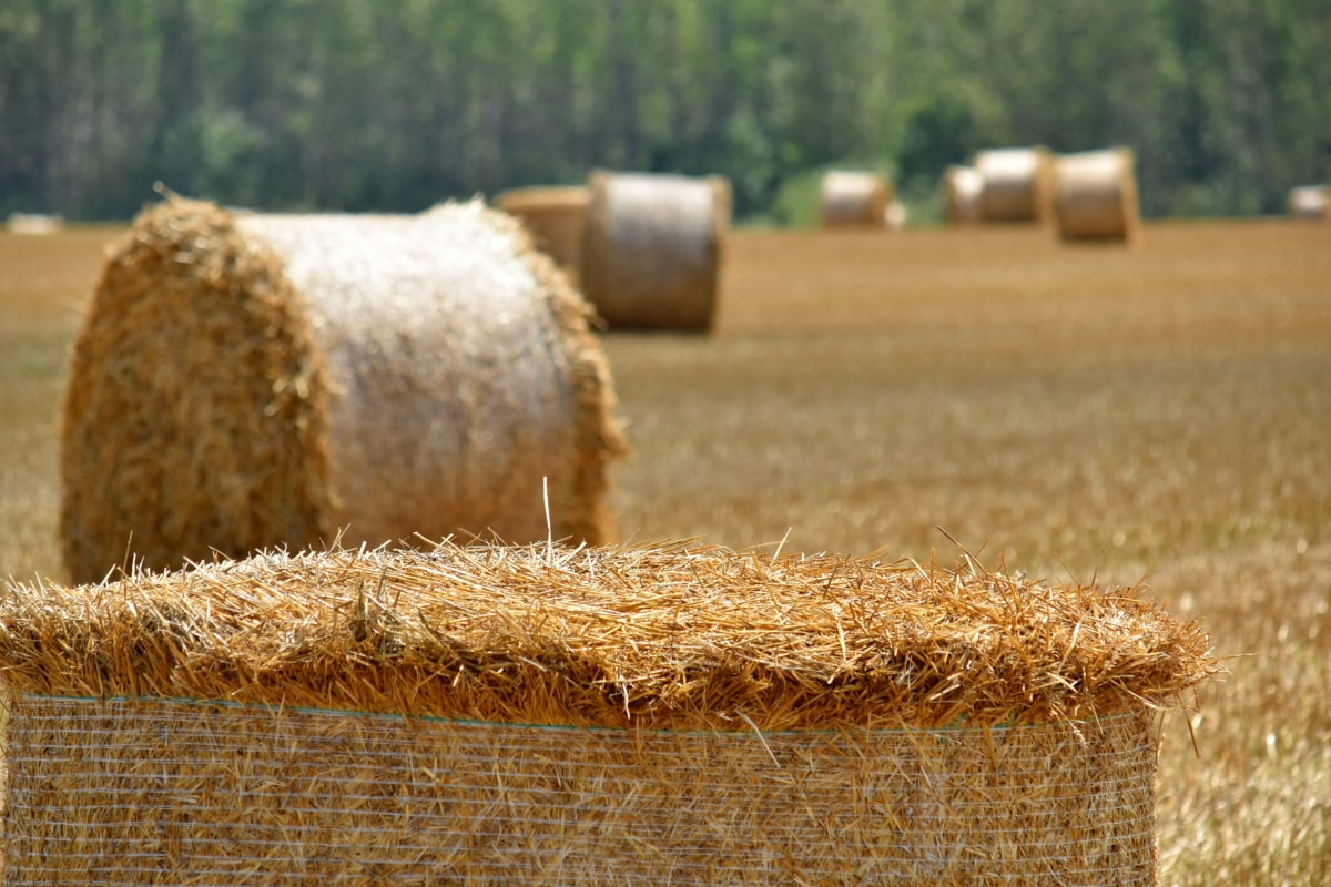 agriculture, bale, barley, countryside, crop, dry, farm, farmland, field, grass