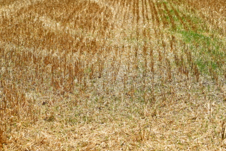 rural, field, agriculture, straw, soil, crop, dry, nature, countryside, hay