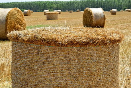 agriculture, bale, barley, cereal, circle, countryside, dry, farmland, field, grass