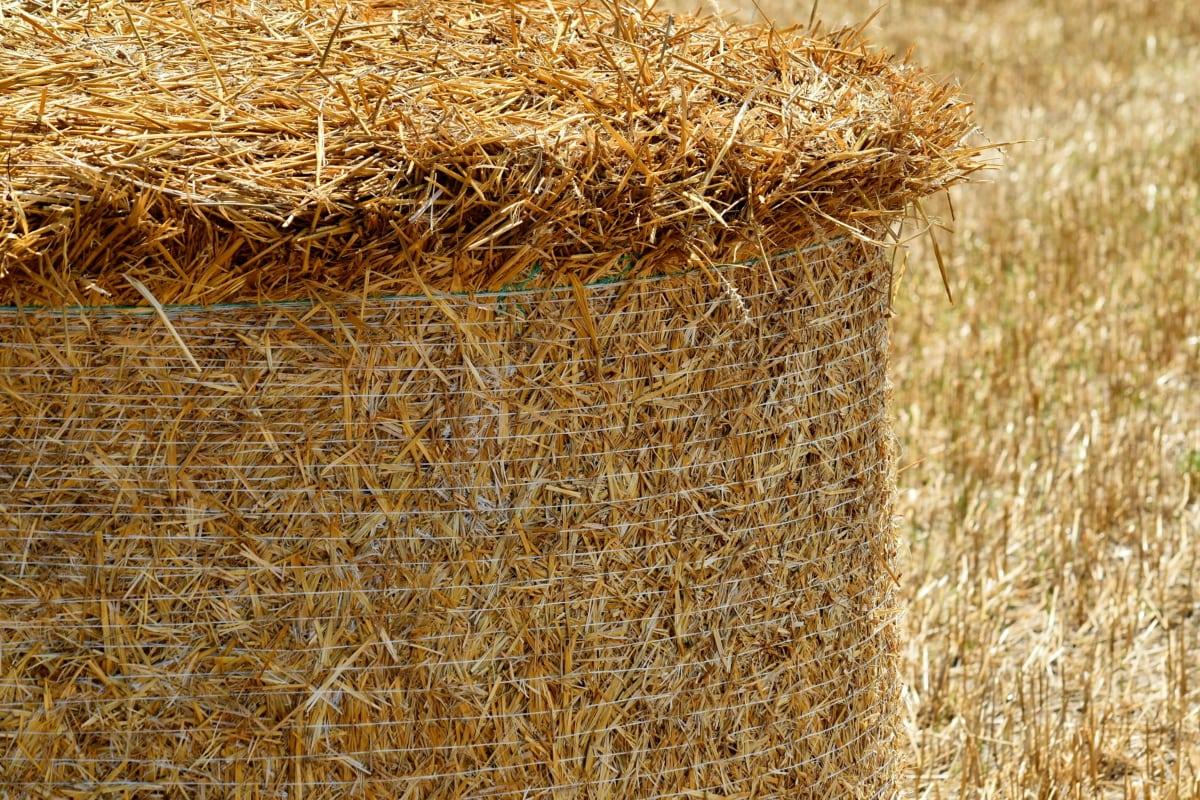 lähietäisyydeltä, heinäkenttä, kesäkaudella, maatalous, Bale, maaseudulla, maatalous, maatalousmaan, kenttä, ruoho