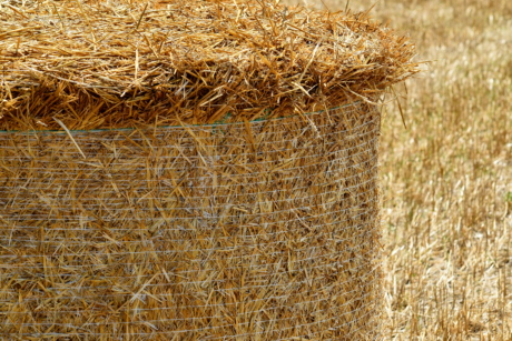 close-up, hay field, summer season, agriculture, bale, countryside, farming, farmland, field, grass