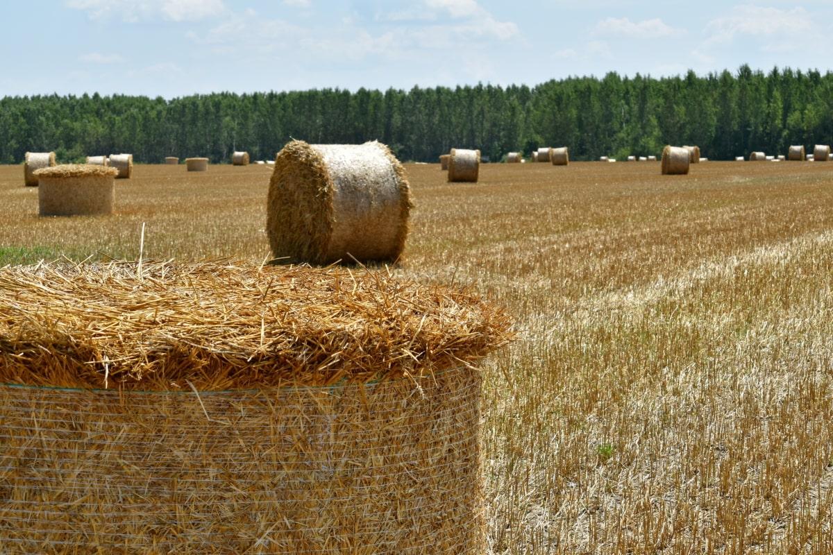 terras agrícolas, feno, campo de feno, palheiro, solo, agricultura, círculo, zona rural, seca, fazenda
