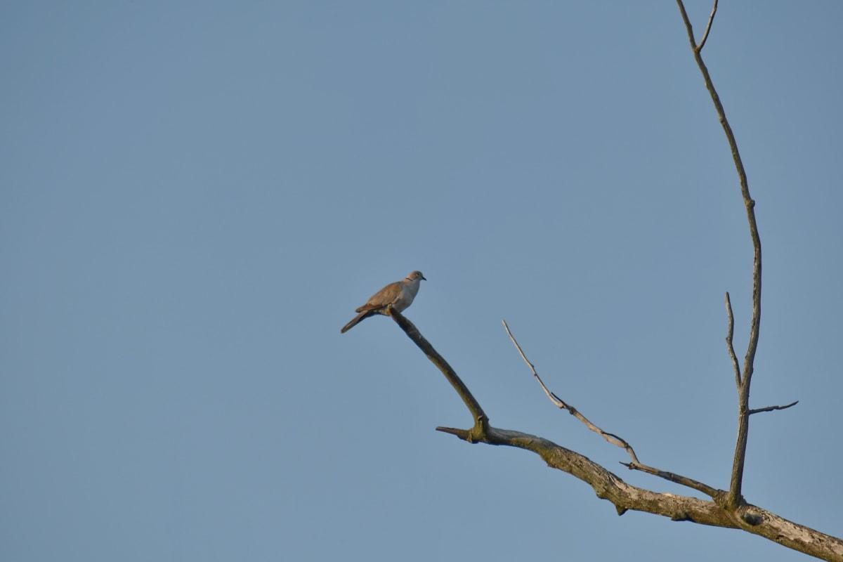 ptica, grana, golub, migracije, drvo, priroda, životinja, biljni i životinjski svijet, ptičje, na otvorenom