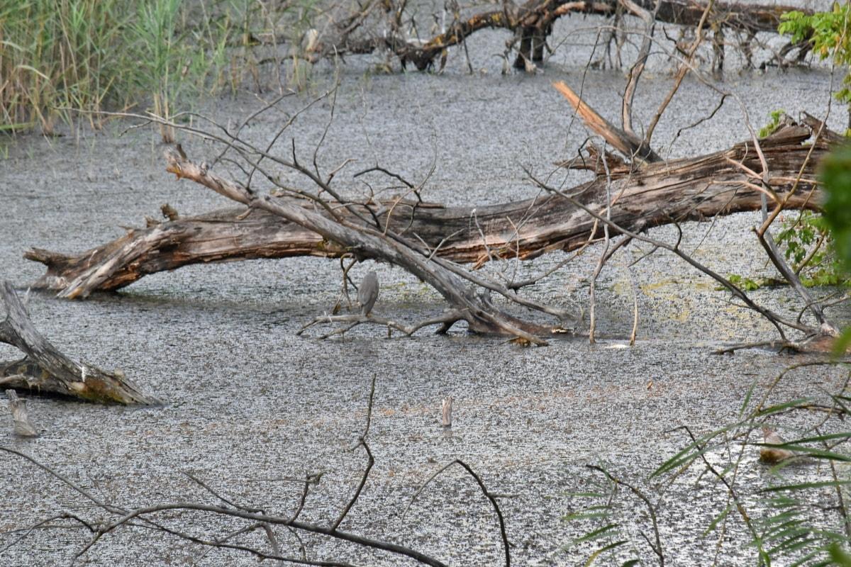prirodno stanište, močvara, drvo, priroda, šuma, hladno, drvo, voda, krajolik