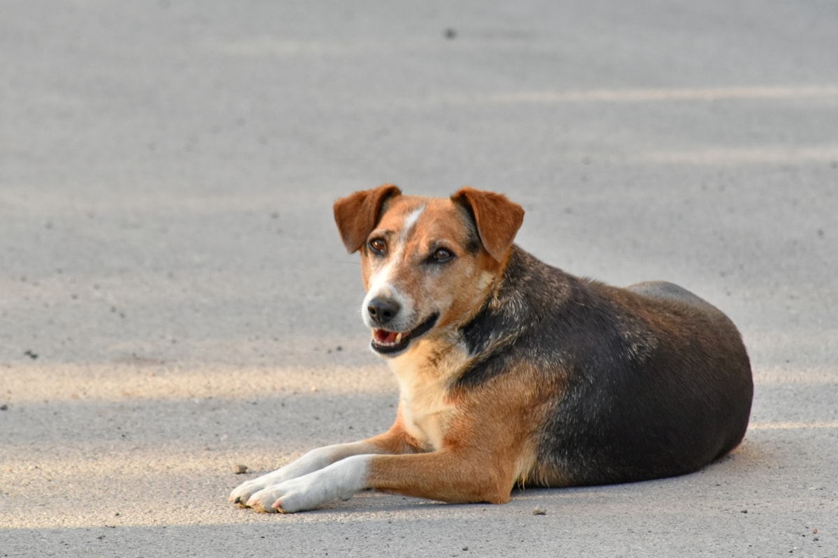 bella foto, cane, verticale, Canino, animale domestico, cucciolo, razza, carina, animale, tempo libero