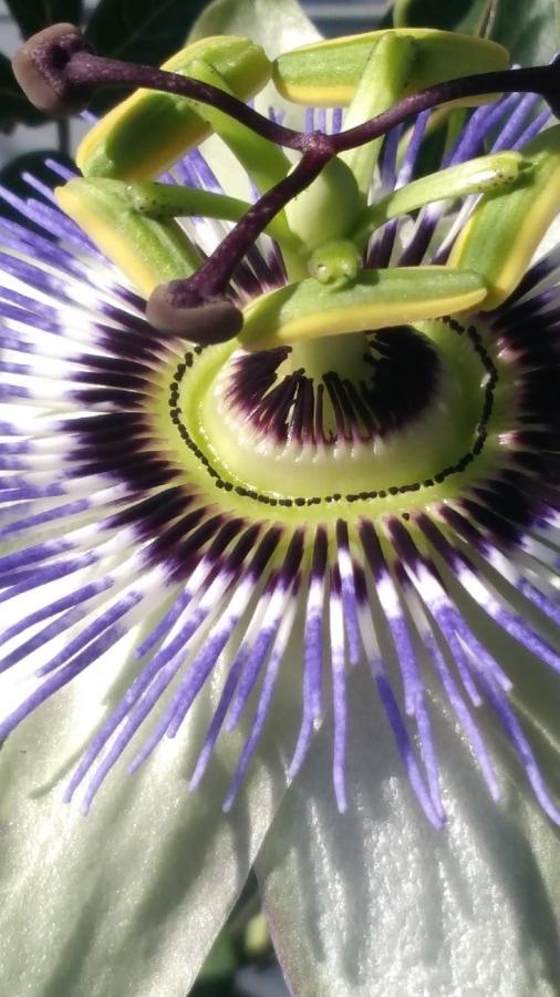 close-up, flower, pistil, tropical, flora, nature, color, beautiful, garden, upclose