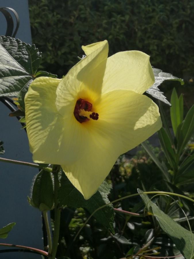 Blütenknospe, Blumengarten, gelb grün, gelblich, Blume, Natur, Blatt, Garten, im freien, Flora