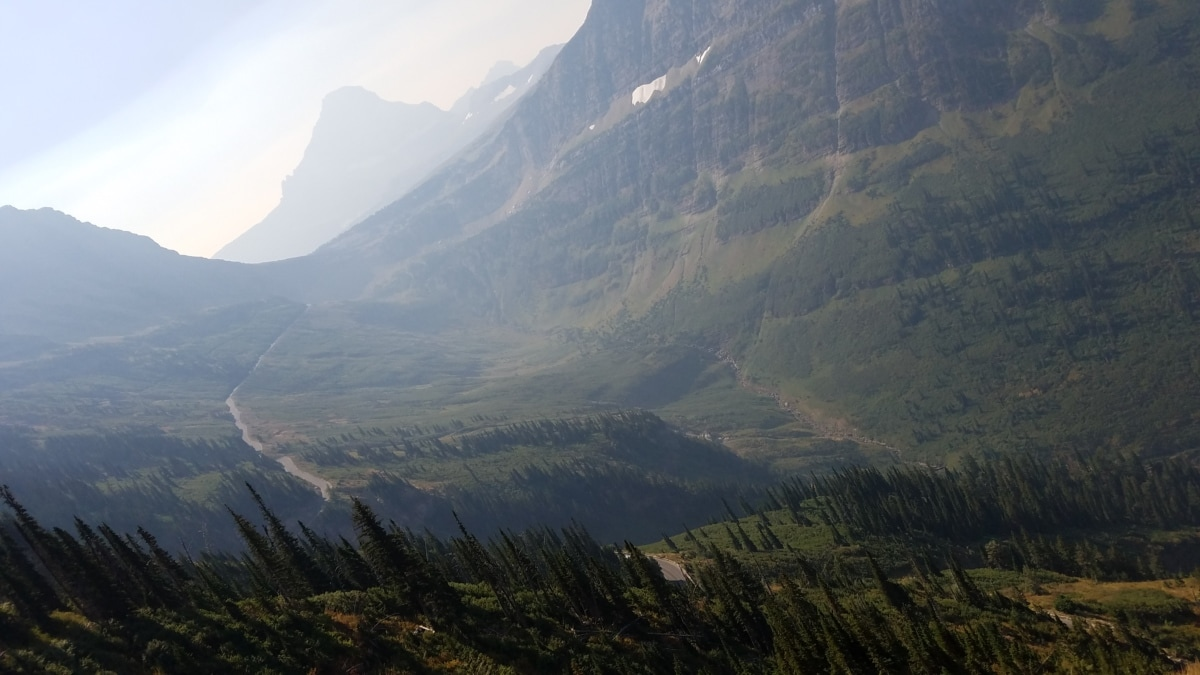 conifer, fog, moisture, morning, valley, mountain, range, landscape, mountains, wood