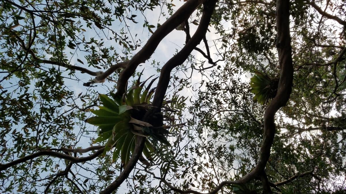 분기, 열대우림, 트리, 열 대, 공장, 나무, 자연, 잎, 지점, 야외에서